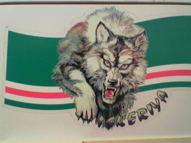 Волк чеченский фото